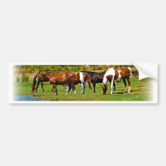 Herd of Horses Bumper Sticker