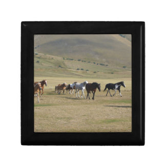 Herd of Horses Gift Box