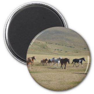 Herd of Horses Magnet