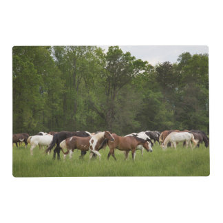 Herd of horses, Tennessee Laminated Placemat