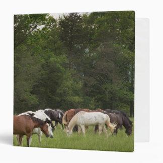 Herd of horses, Tennessee Vinyl Binder
