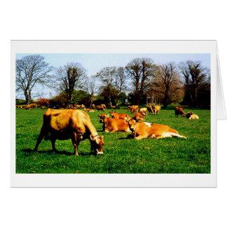 HERD OF JERSEY COWS CARD