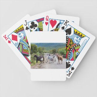 Herd of mountain goats walking on road bicycle playing cards