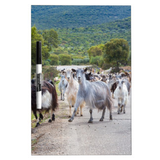 Herd of mountain goats walking on road Dry-Erase whiteboard