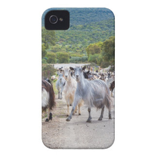 Herd of mountain goats walking on road iPhone 4 case