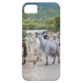 Herd of mountain goats walking on road iPhone 5 cases