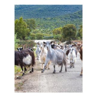 Herd of mountain goats walking on road letterhead