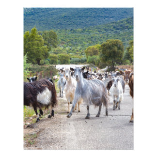 Herd of mountain goats walking on road letterhead design