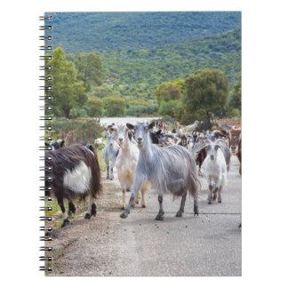 Herd of mountain goats walking on road notebooks