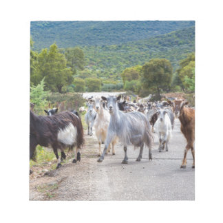 Herd of mountain goats walking on road notepad