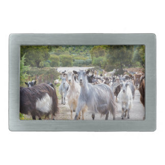 Herd of mountain goats walking on road rectangular belt buckles