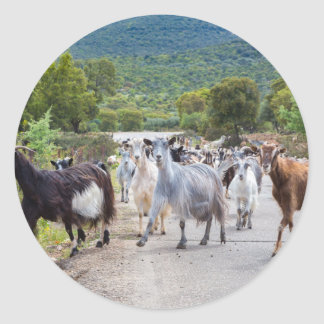 Herd of mountain goats walking on road round sticker