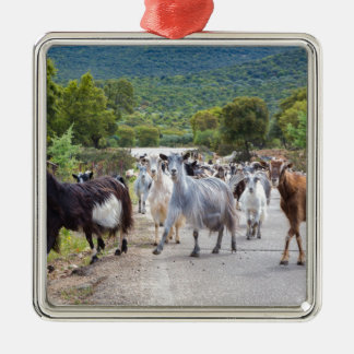 Herd of mountain goats walking on road Silver-Colored square ornament