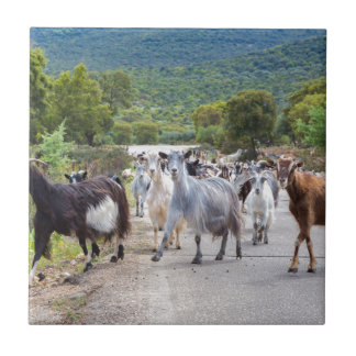 Herd of mountain goats walking on road tile