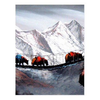 Herd Of Mountain Yaks Himalaya Postcard
