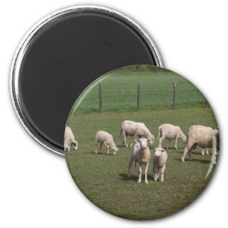 Herd of sheep 2 inch round magnet
