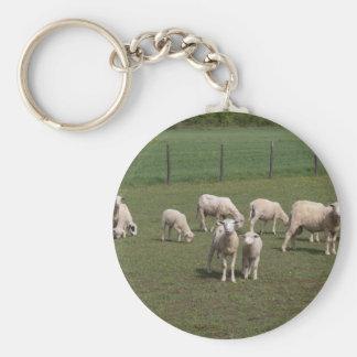 Herd of sheep basic round button keychain