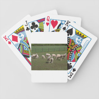 Herd of sheep bicycle playing cards