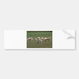 Herd of sheep bumper sticker