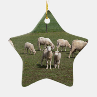 Herd of sheep ceramic star ornament