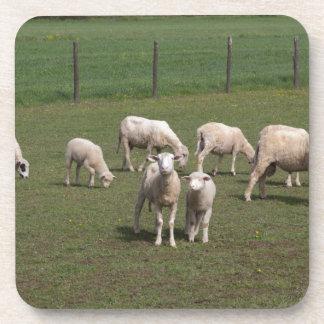 Herd of sheep coaster