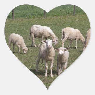 Herd of sheep heart sticker