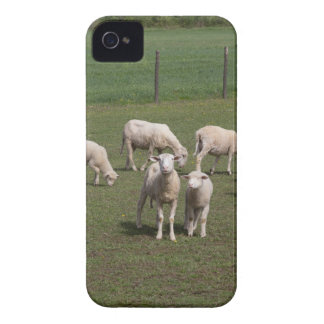 Herd of sheep iPhone 4 cases