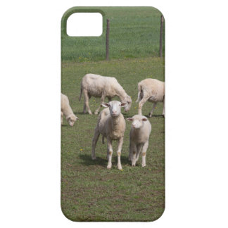 Herd of sheep iPhone 5 covers
