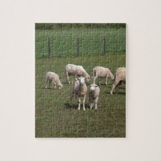 Herd of sheep jigsaw puzzle