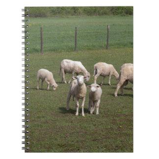 Herd of sheep notebook