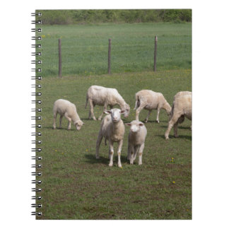Herd of sheep notebooks
