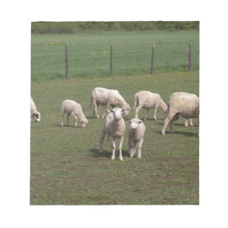 Herd of sheep notepad