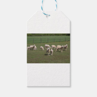 Herd of sheep pack of gift tags