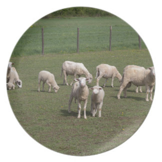 Herd of sheep plate