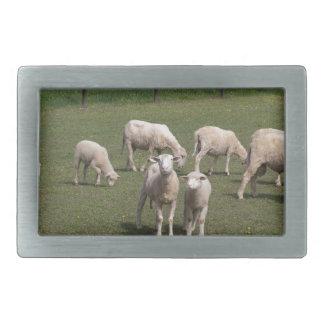 Herd of sheep rectangular belt buckle