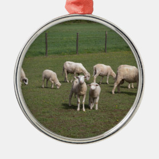 Herd of sheep Silver-Colored round ornament