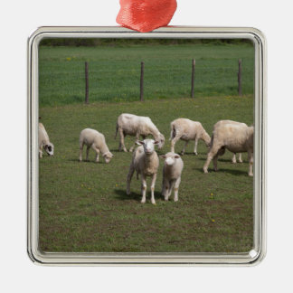 Herd of sheep Silver-Colored square ornament