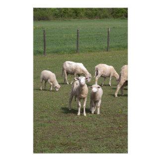 Herd of sheep stationery