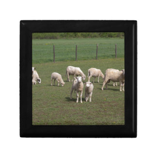 Herd of sheep trinket box