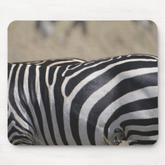 Herd of Zebras grazing, Masai Mara Game Reserve, Mouse Pad