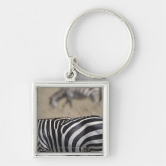 Herd of Zebras grazing, Masai Mara Game Reserve, Silver-Colored Square Keychain