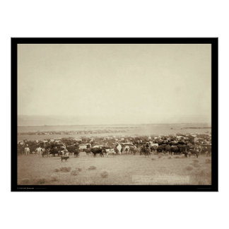Herding Cattle at Moss Agate SD 1887 Poster