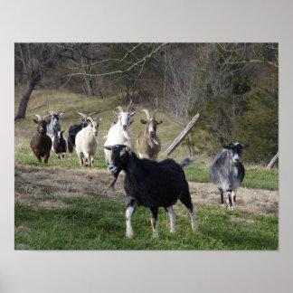 Herding Home poster