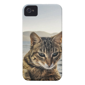 """Here I am"" says the Cat iPhone 4 Cover"