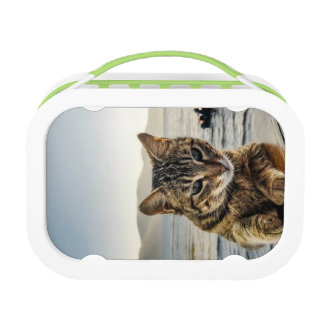 """Here I am"" says the Cat Lunch Box"