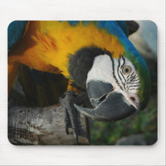 here is looking at you mouse pad
