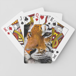 Here kitty kitty playing cards