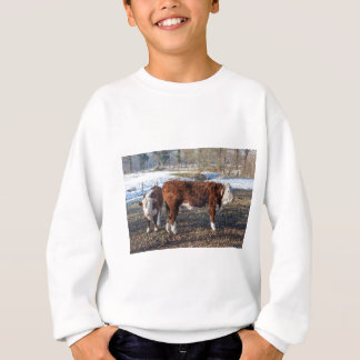 Hereford calves in winter meadow with snow sweatshirt
