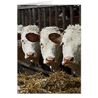 Hereford Cattle Card