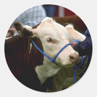 Hereford Cattle Round Sticker